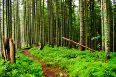 Forest with fallen trees Stock Images