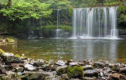 Forest Falls, United Kingdom, England royalty free stock image