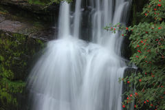 Forest Falls, United Kingdom, England Stock Photography