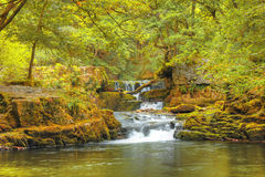 Free Forest Falls, United Kingdom, England Royalty Free Stock Photography - 38101197