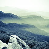 Forest and  faraway mountains Stock Photography