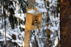 Forest and feeder for birds Royalty Free Stock Photos