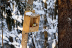 Forest and feeder for birds Stock Image