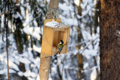 Forest and feeder for birds Royalty Free Stock Image