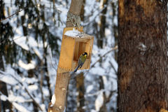 Forest and feeder for birds Royalty Free Stock Images