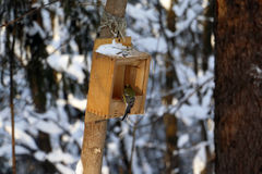 Forest and feeder for birds Royalty Free Stock Photo