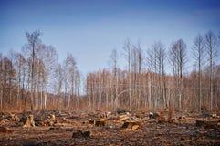Forest Felling Fotografía de archivo libre de regalías