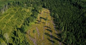 Forest felling area from a bird`s eye. In summer day stock video