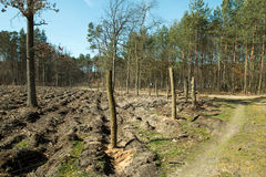 Forest after felling trees Stock Photos