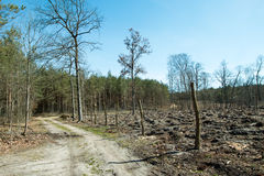Forest after felling trees Royalty Free Stock Photos