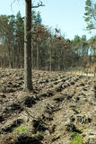 Forest after felling trees. Empty Royalty Free Stock Image
