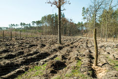 Forest after felling trees. Empty Stock Image