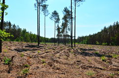 Forest after felling. White Wilderness, forest after felling Stock Image