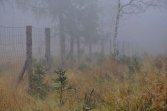 Forest fence in fog Stock Photo