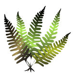 Forest fern. Simple forest fern Stock Image
