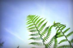 Forest fern stock photos