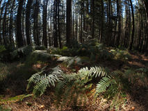 forest with fern Stock Images