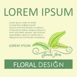 Forest fern. Flower greenery. Poster, label, flower green card with place for text. The image can be used by landscape designers, florists Royalty Free Stock Photo