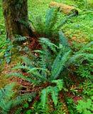 Forest Fern Frenzy Imagens de Stock Royalty Free