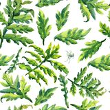Forest fern leaves ornament pattern. Pattern hand drawing watercolor Forest fern leaves ornament Stock Photography