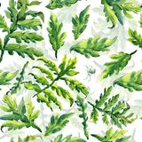Forest fern leaves ornament pattern. Pattern hand drawing watercolor Forest fern leaves ornament Stock Image