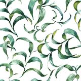 Forest fern leaves ornament pattern Stock Photography