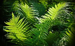 Forest fern nature background Stock Photos