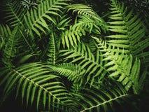 Forest Ferns Lizenzfreie Stockfotografie