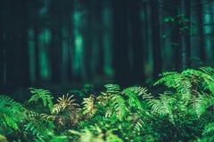 Forest Ferns Closeup Foto de archivo libre de regalías