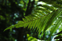Forest Ferns detail Stock Images