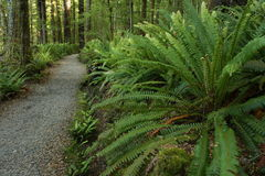 Forest with ferns in Fiordland National Park Stock Images