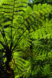 Forest Ferns 2 Stock Image