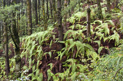 Forest Ferns on a slope Stock Photo