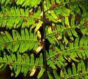 Forest Ferns verde vibrante Fotos de archivo libres de regalías