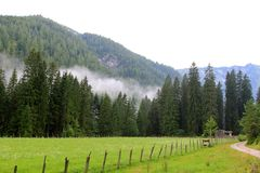Forest and field in Achenkirch - Tyrol,  Austria Royalty Free Stock Photo
