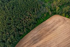 Forest and field Stock Images