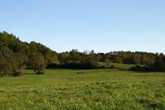 Forest Field con cielo blu immagini stock libere da diritti