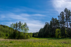 Forest field Royalty Free Stock Photography