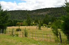 Forest Field. Patagonian Field, with mountains full of pines behind on a cloudy day Stock Images