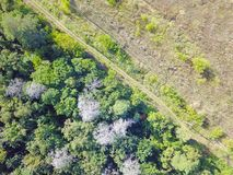 Forest and field with a trail aerial photography. Aerial view on rural pasture in evening light with dramatic shadow Stock Image