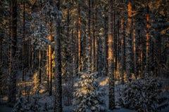 Forest Finland Nature Beautiful Sunset immagine stock libera da diritti