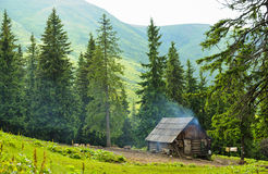 Forest with fir trees Royalty Free Stock Photo