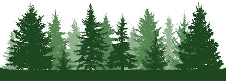 Forest fir trees silhouette. Coniferous green spruce. stock illustration
