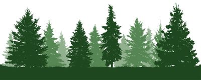 Forest fir trees silhouette. Coniferous green spruce. Vector on white background.