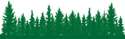 Forest of fir trees silhouette. Park alley of evergreen wood. Coniferous spruce. Vector on white background vector illustration