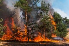 Forest Fire Árvores queimadas após incêndios florestais e lotes do fumo imagens de stock
