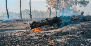 Forest Fire Árvores queimadas após incêndios florestais e lotes do fumo fotos de stock royalty free