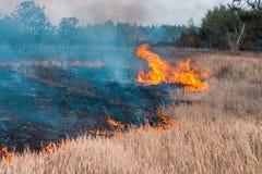 Forest Fire Árvores queimadas após incêndios florestais e lotes do fumo imagem de stock
