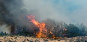 Forest Fire Árvores queimadas após incêndios florestais e lotes do fumo imagem de stock royalty free