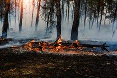 Forest Fire Árvores queimadas após incêndios florestais e lotes do fumo fotos de stock